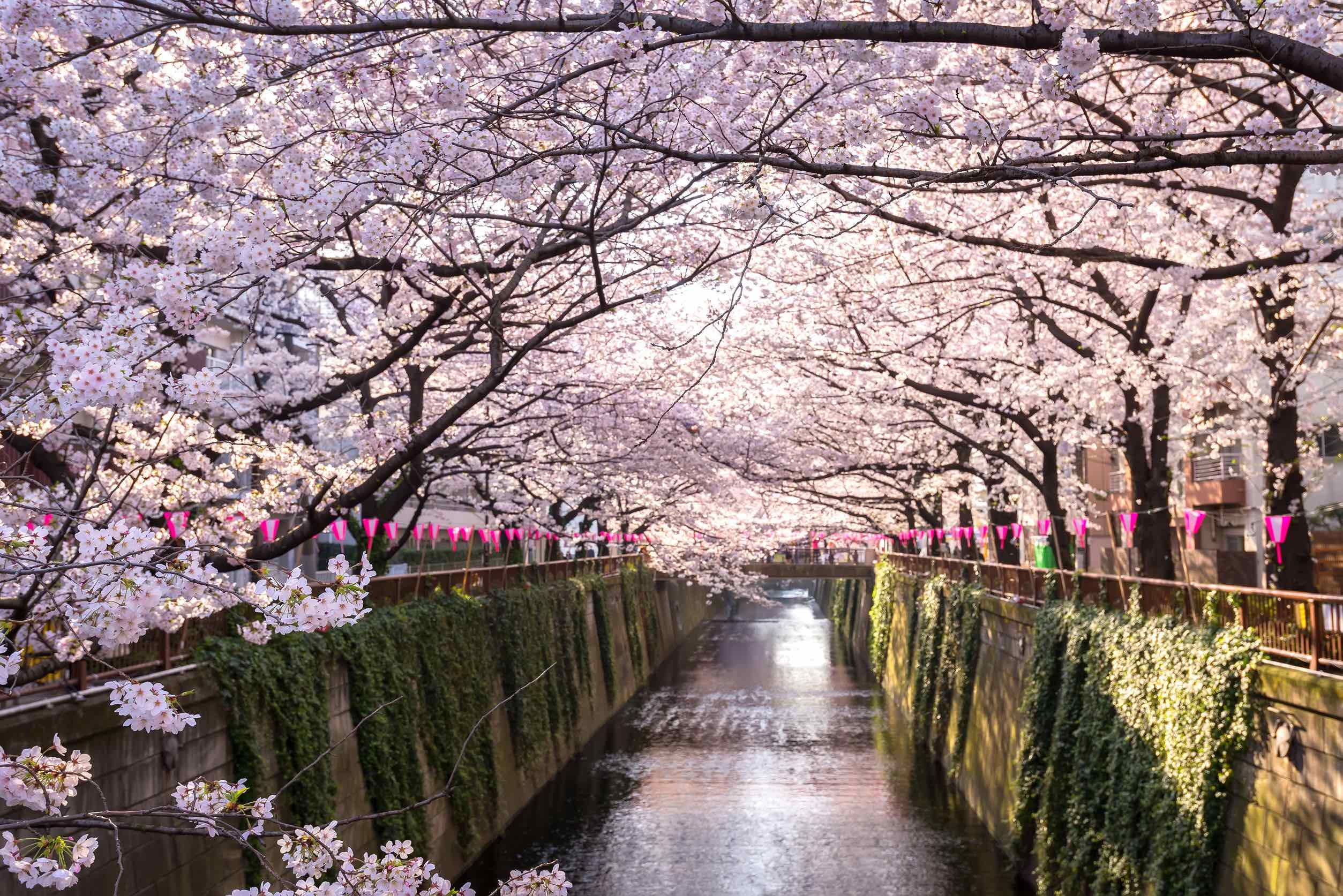 Deal Alert: UK Cities To Tokyo In Business Class From £1490 Round Trip... - God Save The Points